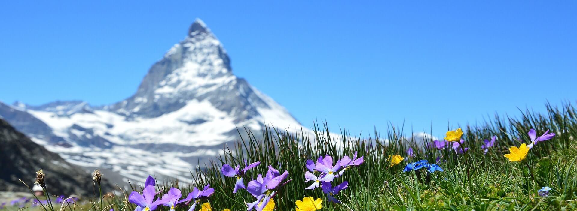 paysage montagneux avec prairie